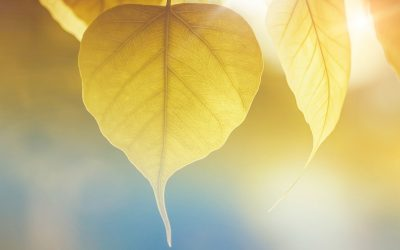 How to Upgrade Your Consciousness Through Energy Healing
